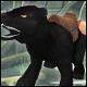Rehka la panthère noire